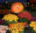 Worcester 2012 Halloween Events Update